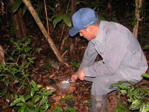 Trampa pitfall para escarabajos copronecrófagos